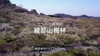 絶景 綾部山 2万本の梅が乱れ咲き たつの市 御津町