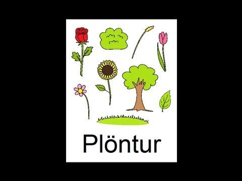 Icelandic Lesson #41: Plants - Singular and Plural, Pronunciation