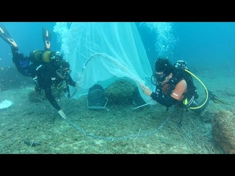 Mediterranean fish stocks revived by underwater nurseries