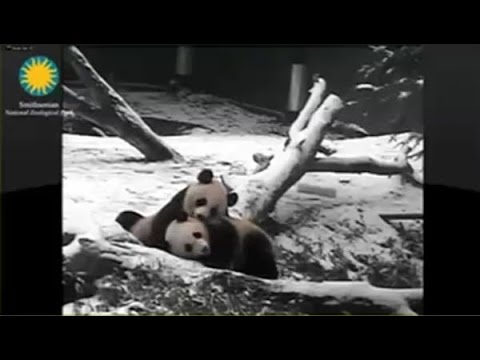 2015-01-27 Snow Day? Bao Bao Says