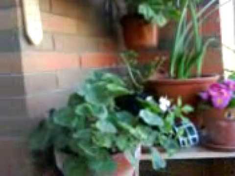 Mi peque o jardin youtube for Jardin youtube