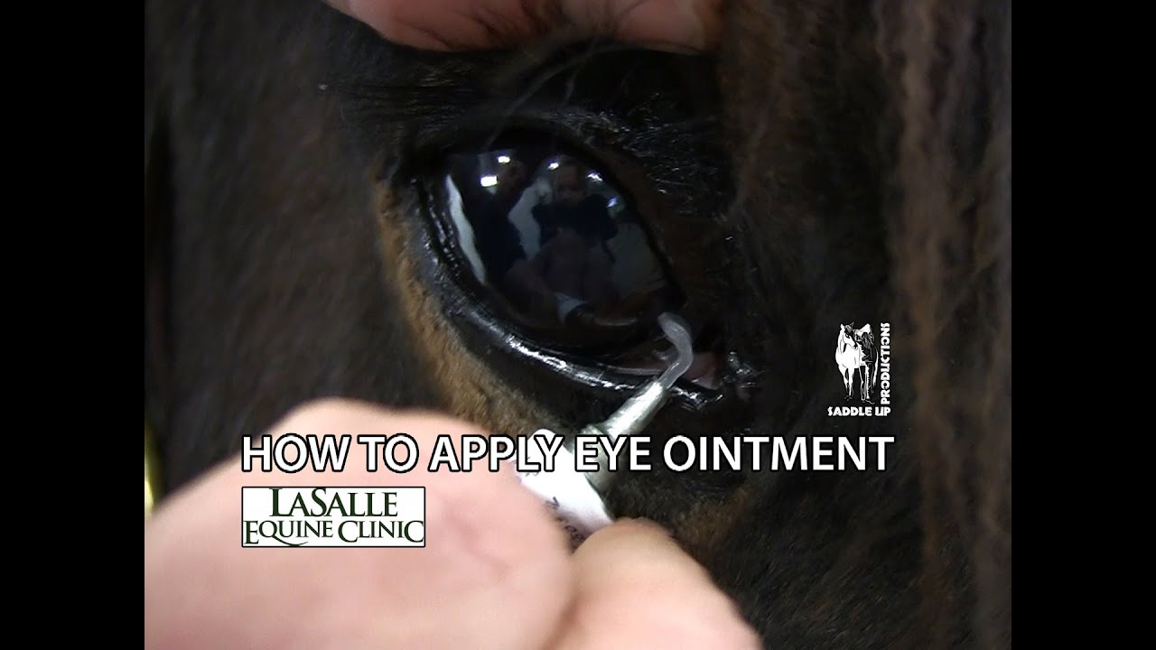 How to Apply Eye Ointment to a Horse