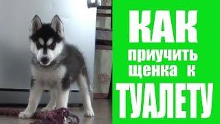 Как приучить щенка к ТУАЛЕТУ (один из способов)