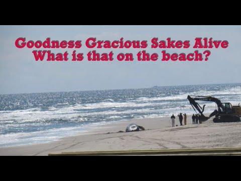Whalehead Beach Corolla Nc You