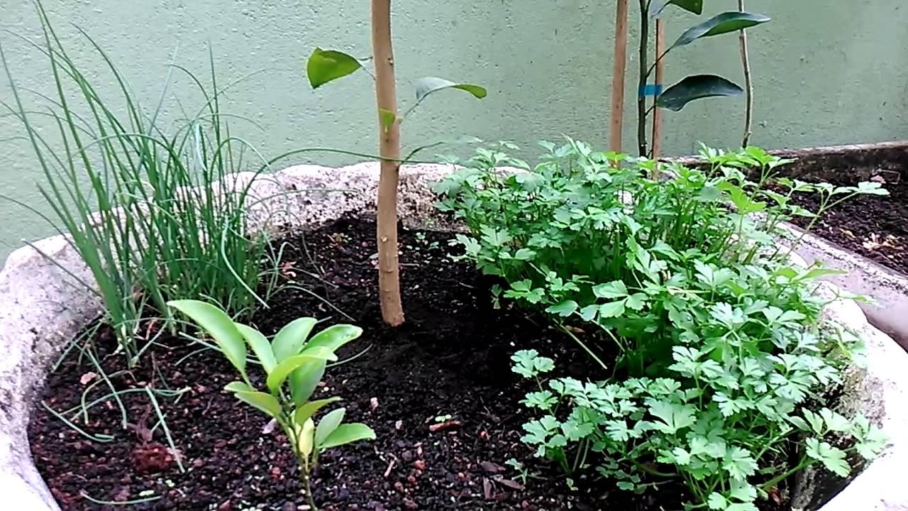 Horta de temperos em vaso de plantas fr tiferas youtube - Cultivar plantas aromaticas en casa ...