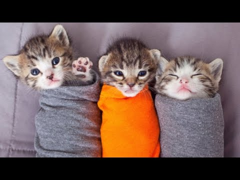 Funniest And Cutest Cats Compilation