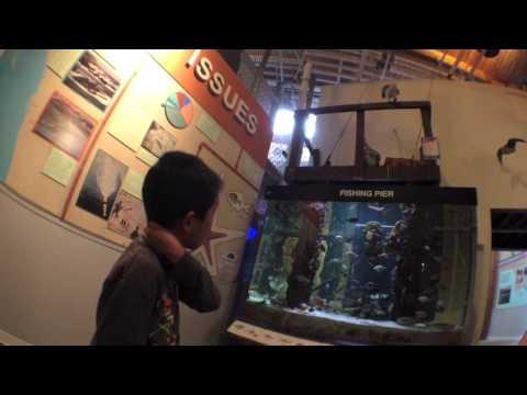 Cabrillo Marine Aquarium (bonus footage)
