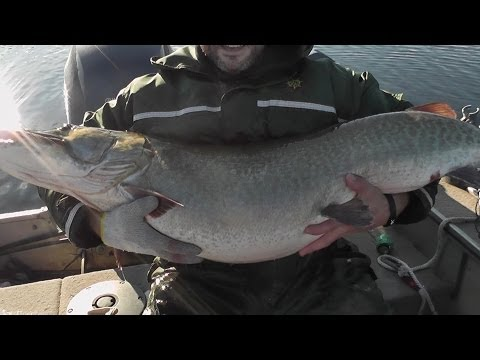 biggest muskie ever caught on video-...