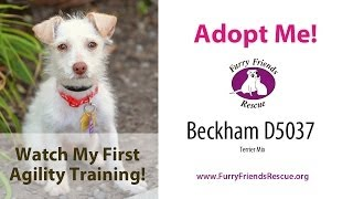 Adopt Me! Little Beckham's First Agility Training @ Red Rover Pet Resort! | Furry Friends Rescue