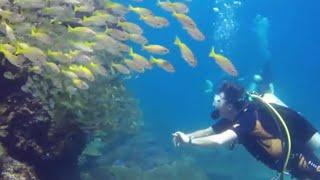 צעירה ישראלית נהרגה בתאונת צלילה בתאילנד
