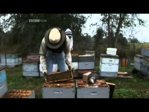 Who Killed the Honey Bee-Part 1 of 4