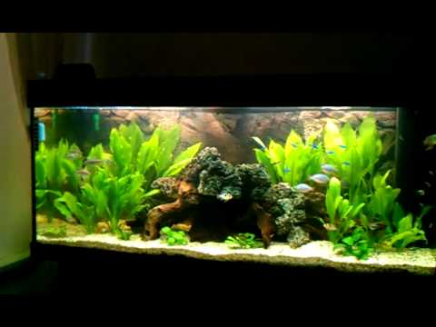 mein aquarium 240l youtube. Black Bedroom Furniture Sets. Home Design Ideas