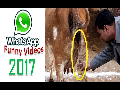 How to Download Unlimited WhatsApp Funny Videos for Free