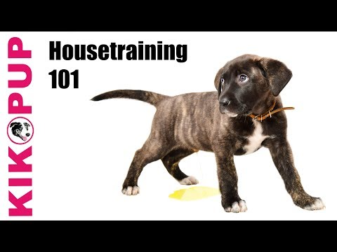 Housetraining 101