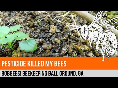 Pesticide Killed My Bees