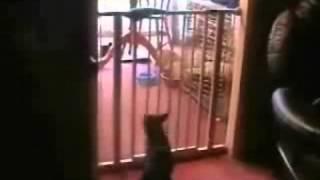 падение кота.flv