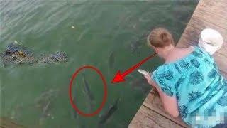 Awalnya beri makan ikan disungai, tiba2 kejadian berikutnya mengagetkan semua orang