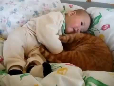 ℱunny ℬaby 𝒜nd 𝒞at 𝒮leeping 𝒯ogether - 𝒻unny 𝒷aby 𝓂oments