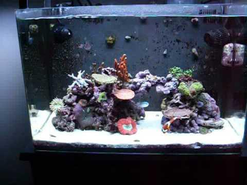 My 20 Gallon Nano Reef Youtube