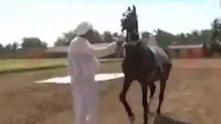 Gigabhai Horse Riding won 50 medals, Porbandar || Sandesh News