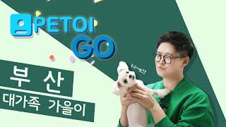 [PETOI] 페토이 GO 가을이네 편