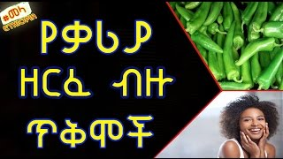 Benefites of Green Chili - የቃሪያ ጥቅም