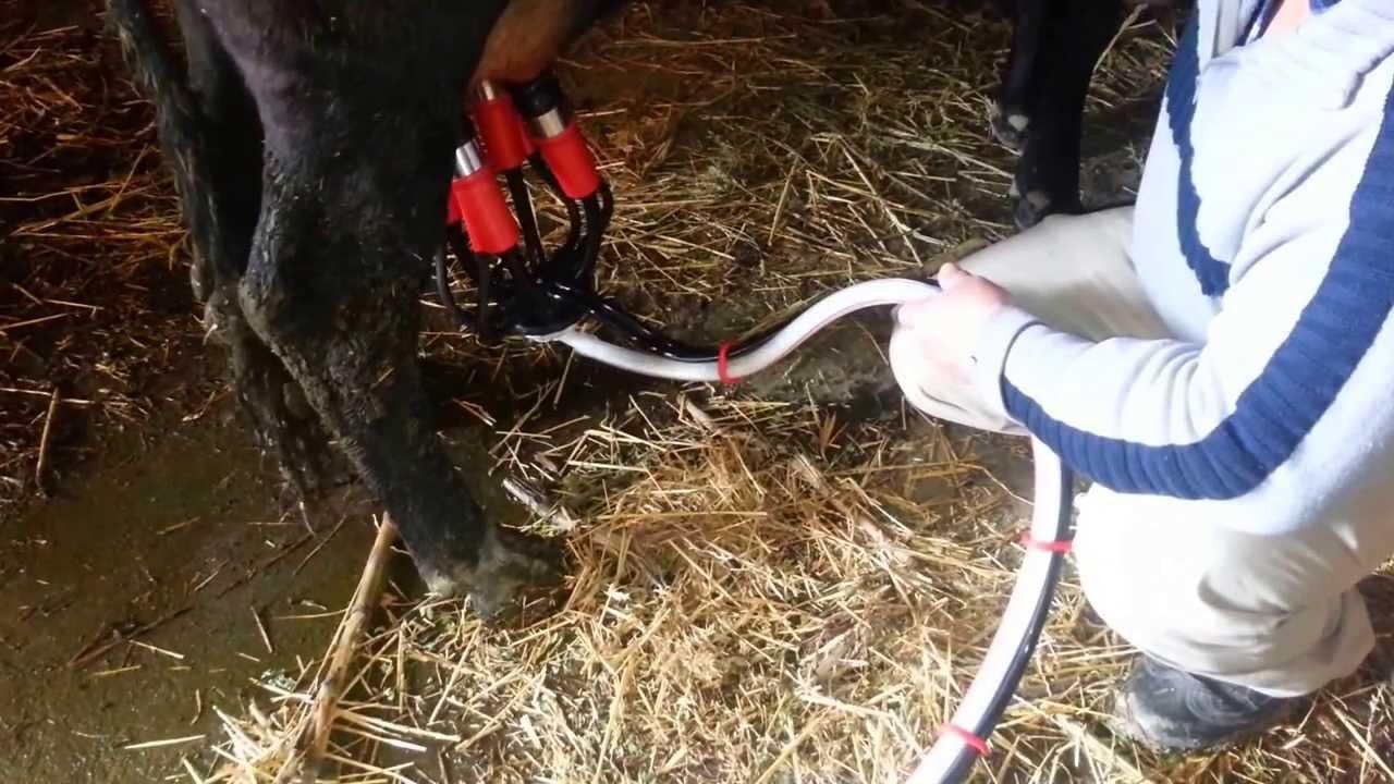 Девок доят доильными аппаратами фото фото 295-418