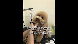 Học nghề chăm sóc thú cưng - Học cắt tỉa lông chó ở đâu Hà Nội  - Linopet.net