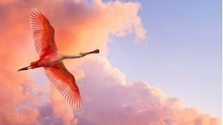 Самые красивые птицы цвета заката и пламени