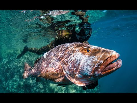 Spearfishing Almaco Jack And Cubera Snapper In Baja California