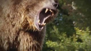 Интересное видео про животных