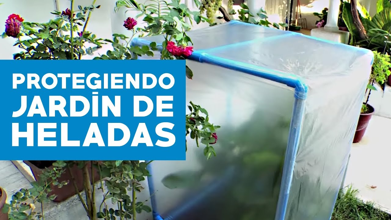 c mo proteger nuestro jard n de las heladas youtube On plantas en maceta que no temen las heladas
