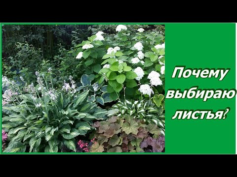 Листья соревнуются с цветами в саду.  Декоративно лиственные растения в саду.