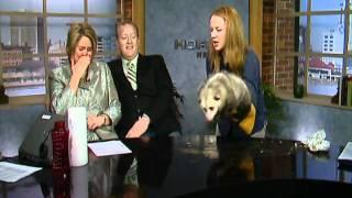 Possum POOPS on DAYBREAK!!!!!!