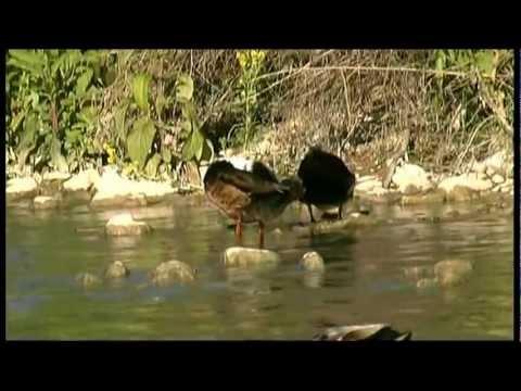 Video relax natura e animali