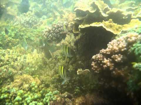 Sri Lanka,ශ්රී ලංකා,Ceylon,Coral Reef (19)