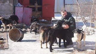 UTV. Оренбургский приют для бездомных животных готовится к весне