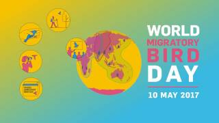 Their Future is Our Future - World Migratory Bird Day 2017