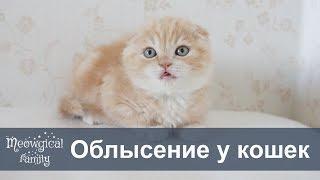 КОШКА ЛЫСЕЕТ - причины алопеции у кошки