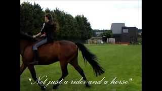 A horse like a best friend
