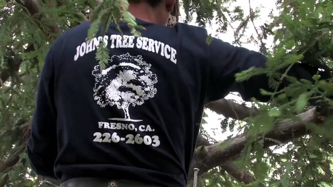 Tree Pruning And Removal Fresno Ca