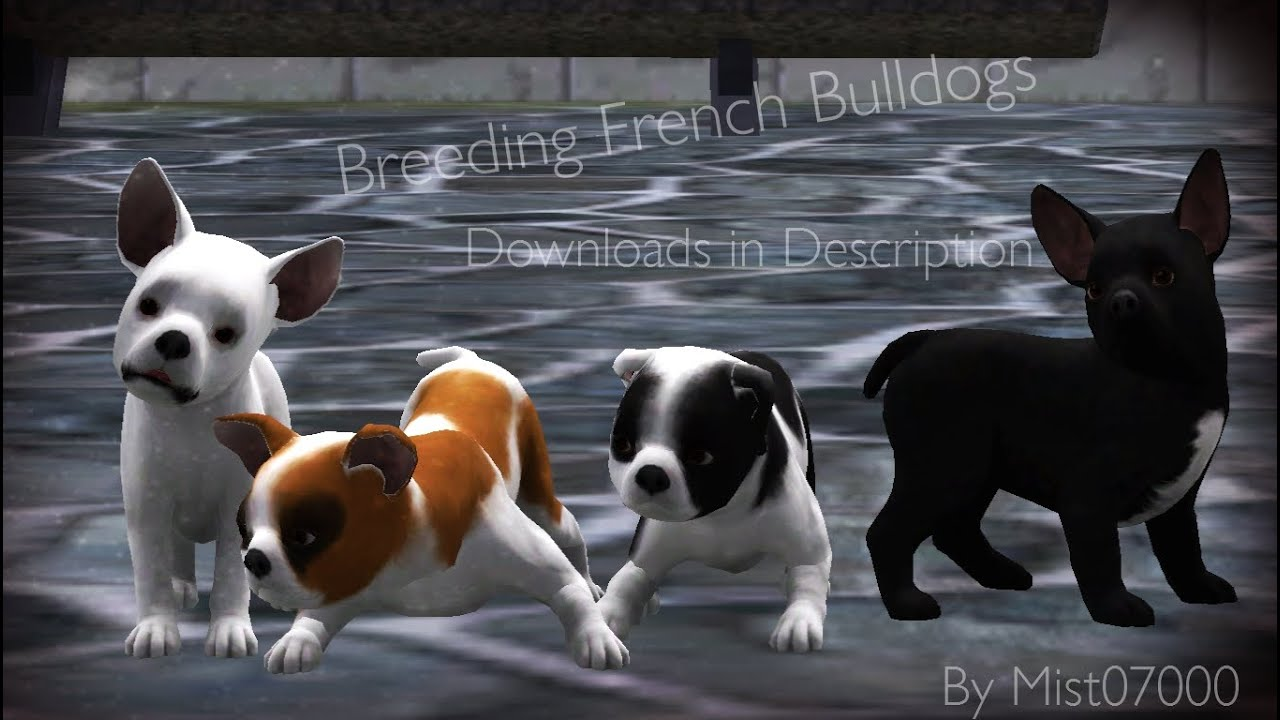Sims  Dogs And Cats Download Free
