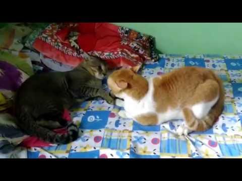 meer cat pictures