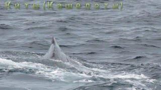Фото сафари на китов