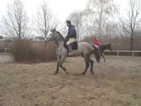 Конный клуб, конюшня, лошади, обучение верховой езде
