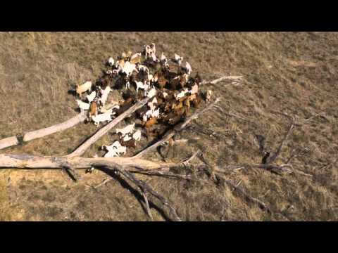 Kennedy Creek Australian Livestock Exports