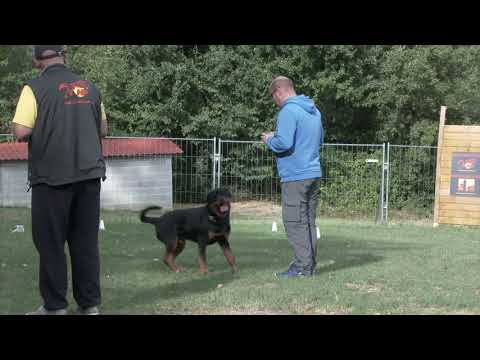 N-Y Episode 2. Centre Herv Pupier - Formation Educateur canin