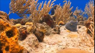 Exploring the Coral Reef  Learn about Oceans for Kids   FreeSchool   YouTube00h01m25s 00h01m27s