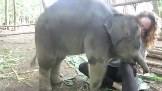 Baby Elephant Plays with girl
