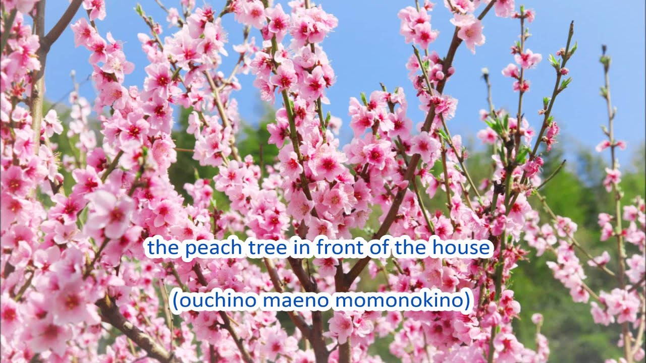 Japanese folk song 5 come spring haruyo koi youtube japanese folk song 5 come spring haruyo koi mightylinksfo Image collections